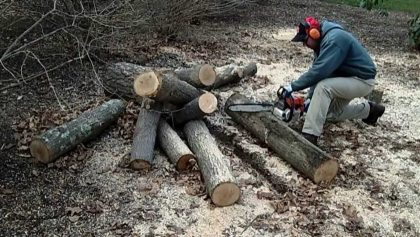 cut logs with a chainsaw
