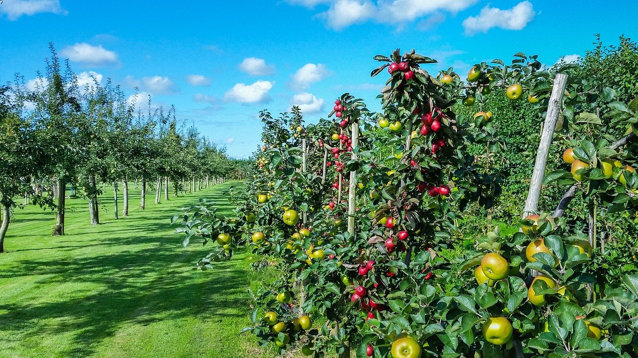 apple trees free of pesticides