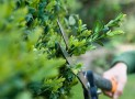 What is the Best Time to Trim Evergreen Shrubs?