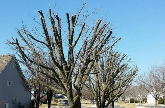 Quick Tips on How to Prune a Tree to Keep It Small